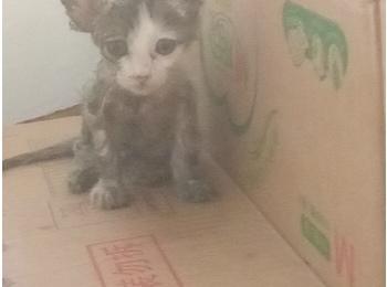 从老鼠沾上救的小猫