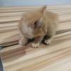 刚满两个月萌猫求领养