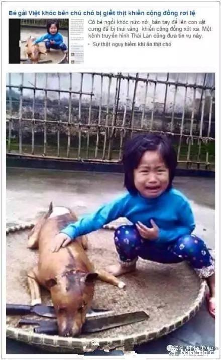 5岁小女孩的狗狗不见了,再次相遇竟然是这样的场景1