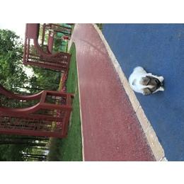 我家有一只蝴蝶犬,两个半月大,由于要回老家照顾老人,没人照顾,寻找爱狗狗人士收养!