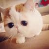 猫猫生小猫时的注意事项!!