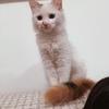 我有一只三花母猫寻求领养人