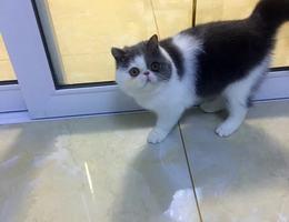猫猫萝卜的家人已经找到了,谢谢...