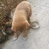 公司门口的一只流浪狗,路还走不稳就被遗弃了