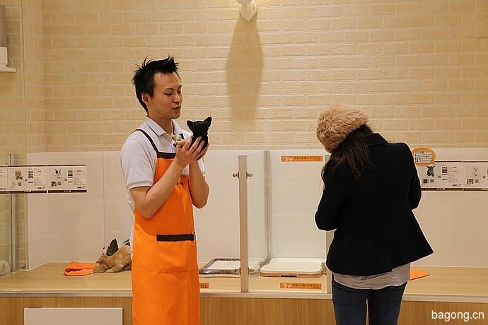 跨国看门道,推敲日本宠物店的经营模式19