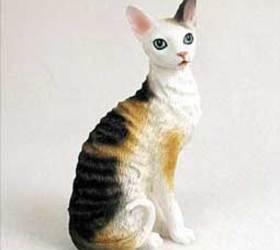 柯尼斯卷毛猫|康沃耳帝王猫|帝王猫