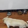 捡的小狗,养一年了,准备换离开沈阳希望有好心人领养,
