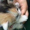 有一窝小猫刚出生大概一个月,求主人
