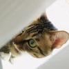 坐标广州,三岁绝育公猫求领养 ,联系q3461838898,备注:领养🐱