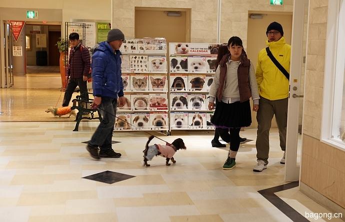 跨国看门道,推敲日本宠物店的经营模式22