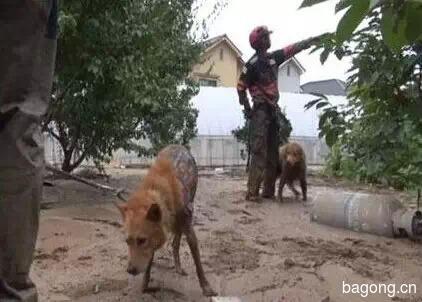 差点被安乐死的小宠物们  在人类遇到危难时刻  却变成英雄10