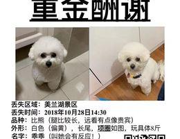 寻狗,重金酬谢,丢失区域;上海...