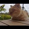 一只超级乖的橘猫