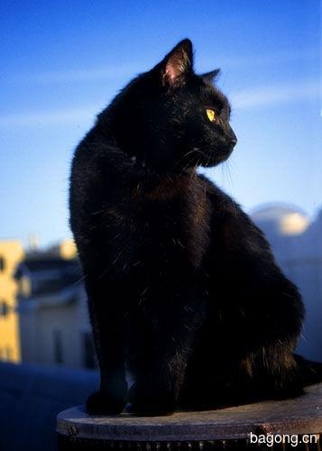 教您快速辨别猫星人品种!!!14