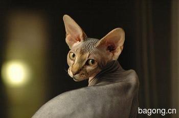 教您快速辨别猫星人品种!!!20