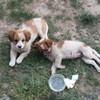 两只小狗求领养