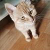 四个月小母猫,求爱猫人士领养。