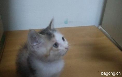健康活泼的小猫咪免费领养了2