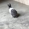 兔兔于7月2日下午两点半丢失,具...