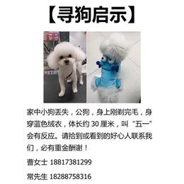 寻狗启示,1月15号在上海徐汇区...