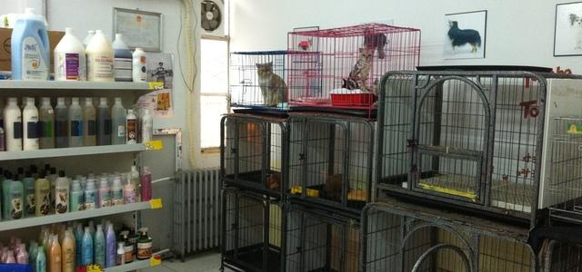 宠艺宠物生活馆2