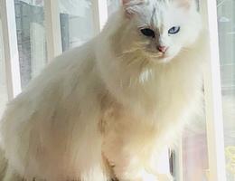 我妈扔了我的猫,两只,一只橘猫...