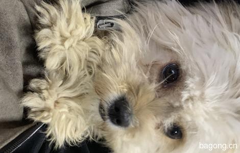 有爱狗人士收养吗0