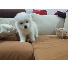 家里原因 这只小宠物想找个人领养 不用一分钱的 有好心人抱走吗?