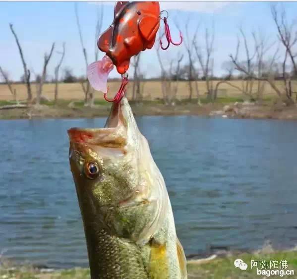 【震撼】为什么经常钓鱼的人都不长寿1