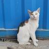 工作地点附近流浪猫求收养