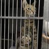 厦门救助的猫猫无偿领养