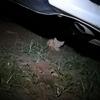 捡到一只小猫咪(像橘猫)