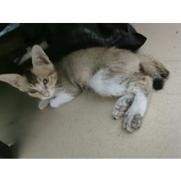 找爱心人士收养小猫