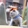 {无锡}英短小懒猫找新家 英国短毛猫 蓝猫