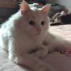 萌猫找领养免费
