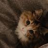 北京地区可爱小猫咪求抱走