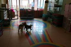 特摩宠物2