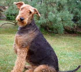 万能梗|艾里梗,梗王,河畔犬,宾格利犬