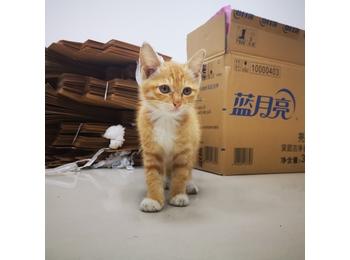 两只纯橘猫已被领养 ...