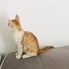爱喵人士,两个月橘猫求好心人领养