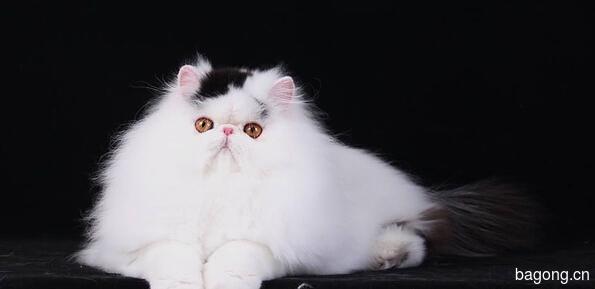 教您快速辨别猫星人品种!!!8