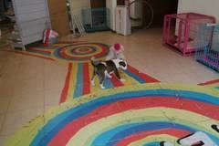 特摩宠物4