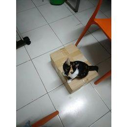 猫猫在4.16在沙太南路公交站附近...