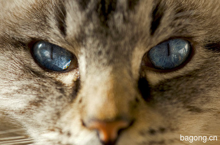 5-simple-cat-care-tips-for-their-necessities.jpg