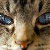 5个简单的猫护理技巧的必要性