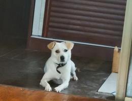 陪我们六年的狗狗伊萨,六岁,公...
