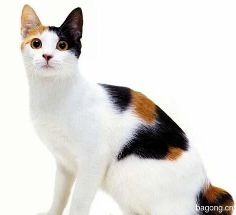 教您快速辨别猫星人品种!!!22