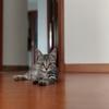 5个月大狸花猫,求好心人领养