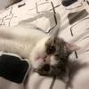 我有一只加菲猫,想找个好人家
