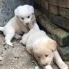 免费领养家养狗宝